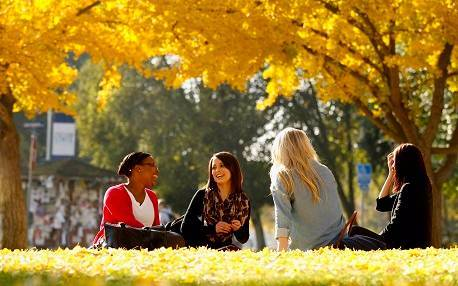 students, yellow trees